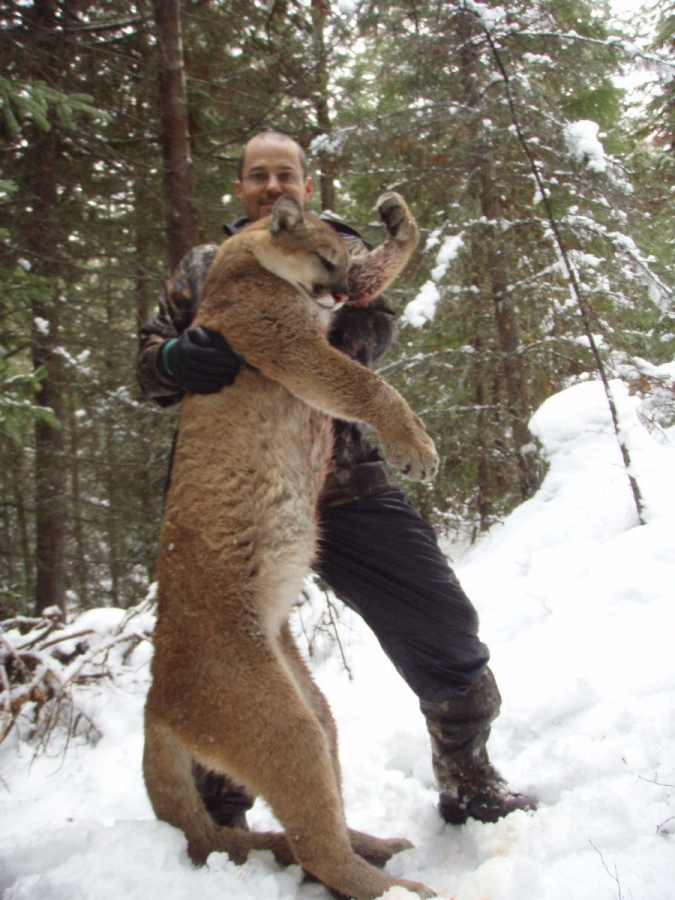 Cougar pic gallery