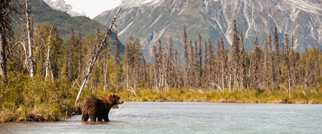 Guided Bear Hunting Trips in BC